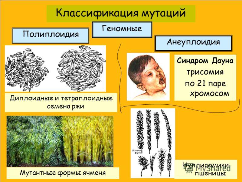 Классификация мутаций Полиплоидия Геномные Диплоидные и тетраплоидные семена ржи Анеуплоидия Синдром Дауна трисомия по 21 паре хромосом Нуллисомики пшеницы Мутантные формы ячменя
