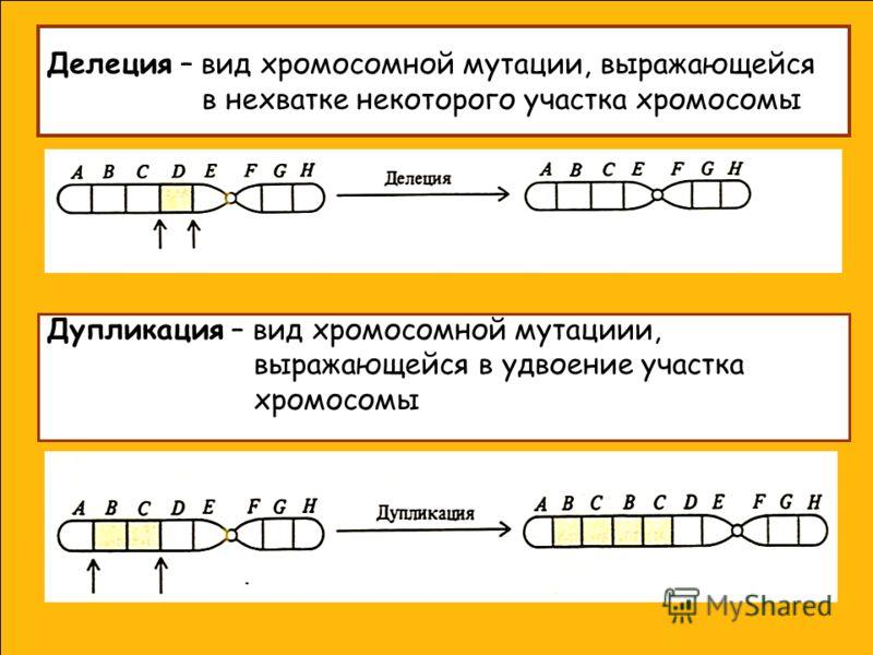 Делеция – вид хромосомной мутации, выражающейся в нехватке некоторого участка хромосомы Дупликация – вид хромосомной мутациии, выражающейся в удвоение участка хромосомы
