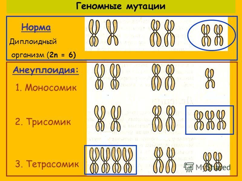 Норма Диплоидный организм (2n = 6) 1. Моносомик 2. Трисомик 3. Тетрасомик Анеуплоидия: Геномные мутации