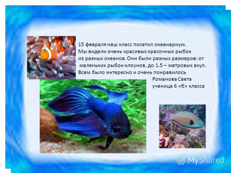 15 февраля наш класс посетил океанариум. Мы видели очень красивых красочных рыбок из разных океанов. Они были разных размеров: от маленьких рыбок-клоунов, до 1.5 – метровых акул. Всем было интересно и очень понравилось Романова Света ученица 6 «б» кл