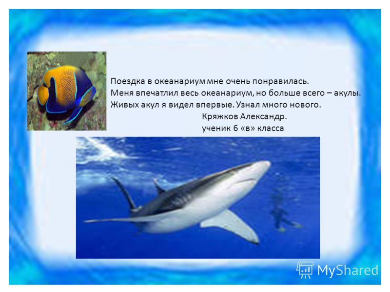 Поездка в океанариум мне очень понравилась. Меня впечатлил весь океанариум, но больше всего – акулы. Живых акул я видел впервые. Узнал много нового. Кряжков Александр. ученик 6 «в» класса