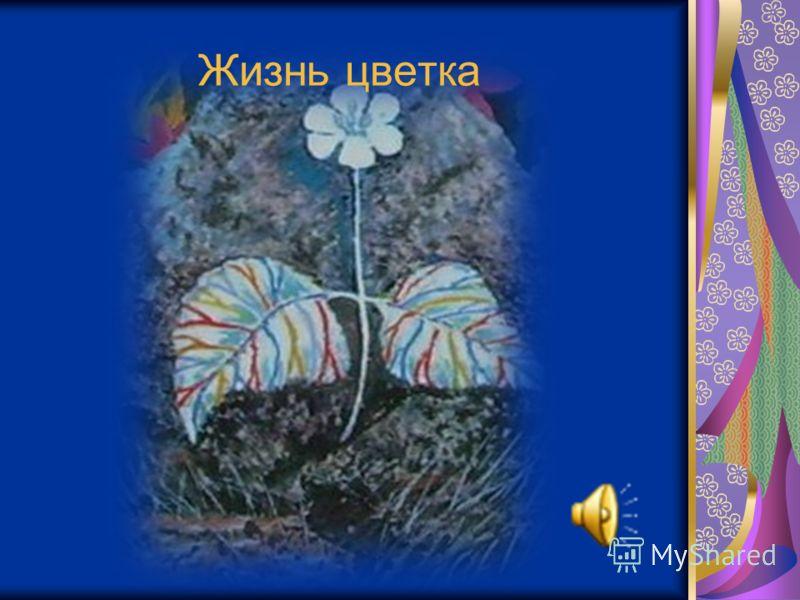 Жизнь цветка