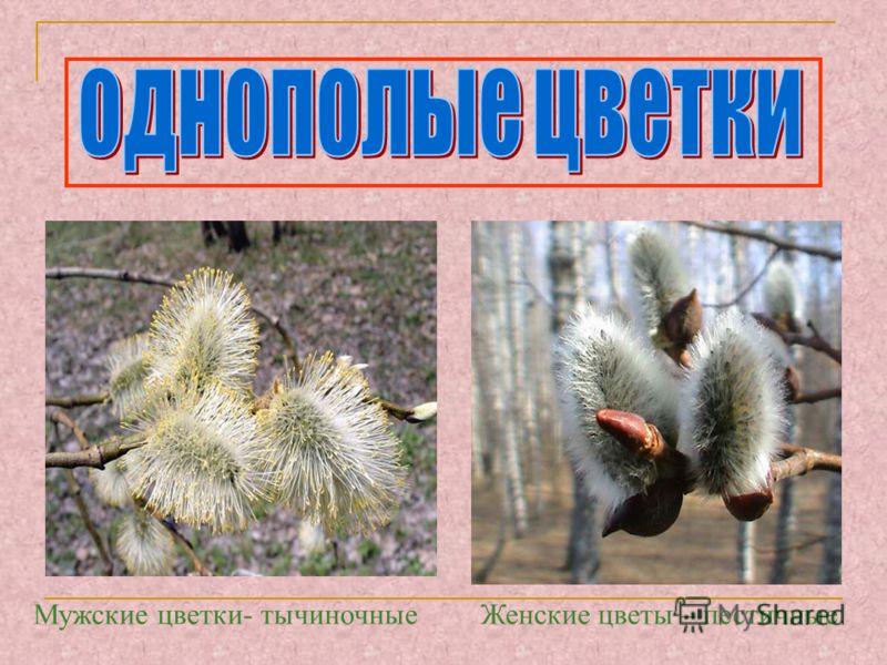 Мужские цветки- тычиночныеЖенские цветы – пестичные