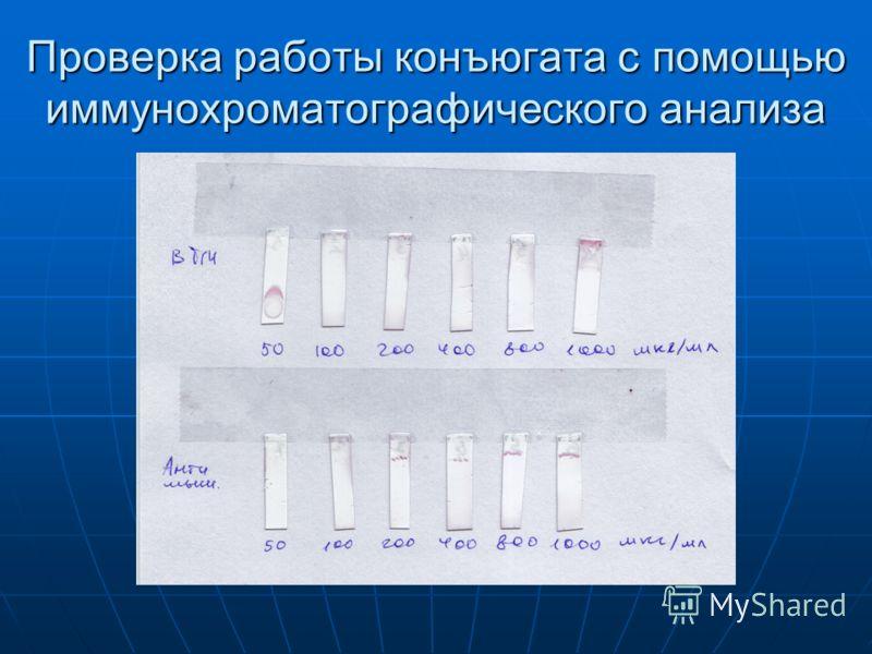 Проверка работы конъюгата с помощью иммунохроматографического анализа
