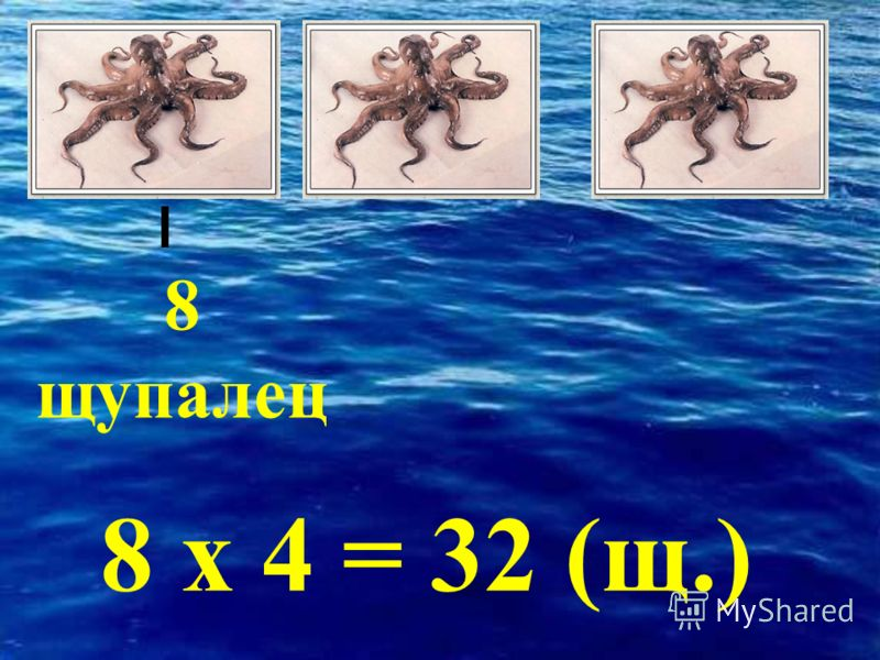 8 щупалец 8 х 4 = 32 (щ.)