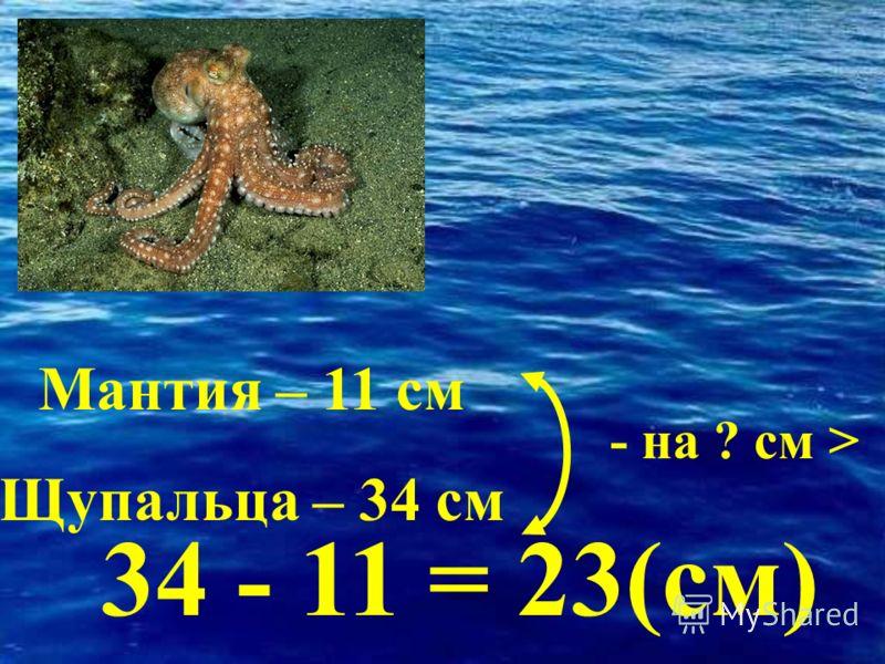 - на ? см > 34 - 11 = 23(см) Мантия – 11 см Щупальца – 34 см
