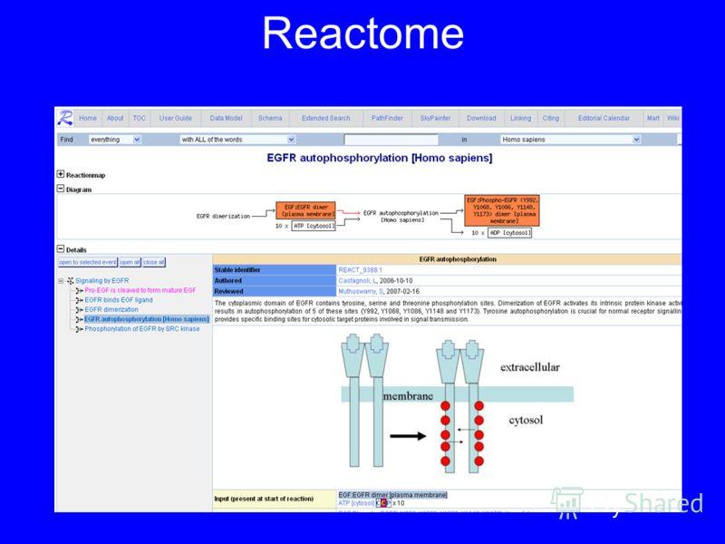 Reactome