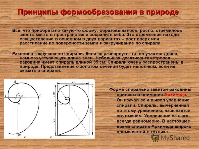 Принципы формообразования в природе Форма спирально завитой раковины привлекла внимание Архимеда. Он изучал ее и вывел уравнение спирали. Спираль, вычерченная по этому уравнению, называется его именем. Увеличение ее шага всегда равномерно. В настояще