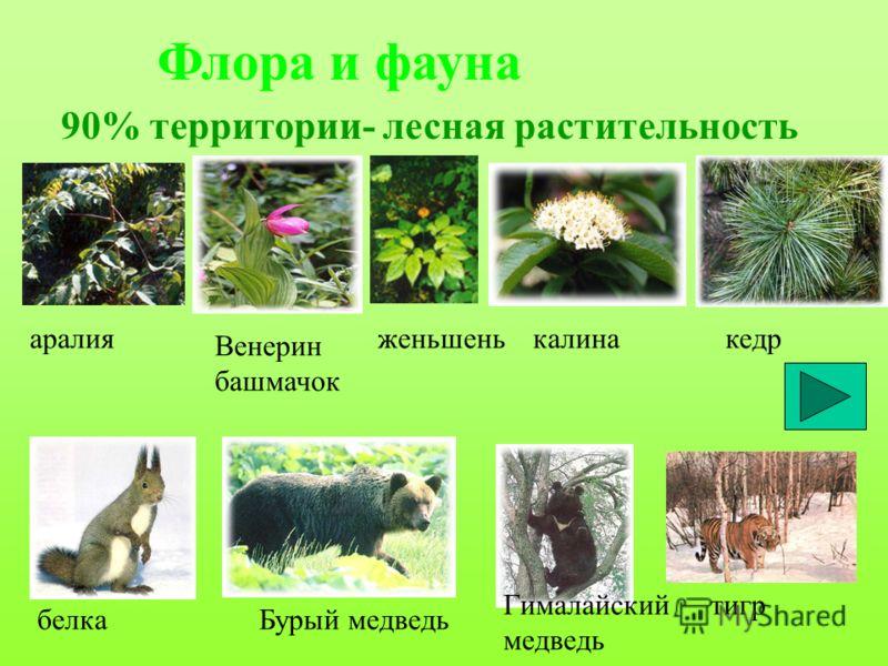 Флора и фауна 90% территории- лесная растительность аралия Венерин башмачок женьшенькалинакедр белкаБурый медведь Гималайский медведь тигр
