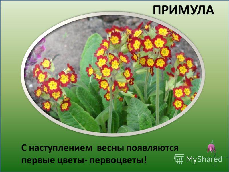 Детские картинки про весну и первые цветы