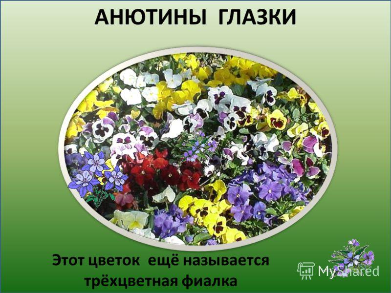 этот цветок называется трёхцветная фиалка. АНЮТИНЫ ГЛАЗКИ Этот цветок ещё называется трёхцветная фиалка