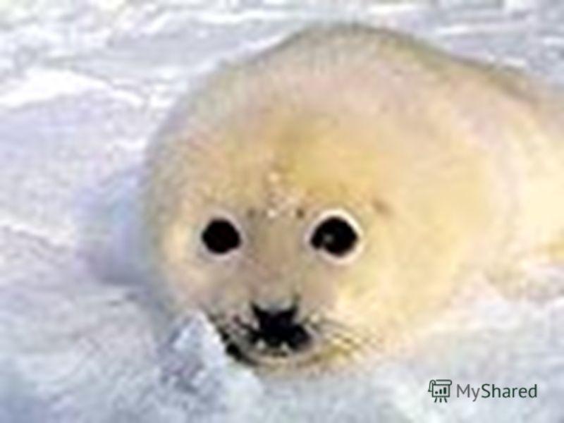 В неогеновый период появляются дельфины, тюлени, моржи виды, живущие и в современных условиях