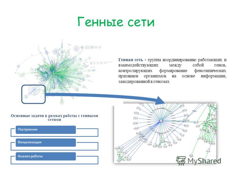 Генные сети Генная сеть - группа координированно работающих и взаимодействующих между собой генов, контролирующих формирование фенотипических признаков организмов на основе информации, закодированной в геномах Основные задачи в рамках работы с генным