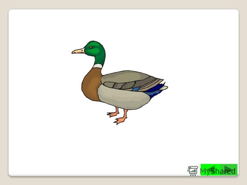 Какие птицы изображены на гербе города Чебоксары?