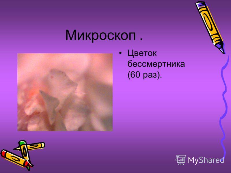 Микроскоп. Цветок бесcмертника (60 раз).