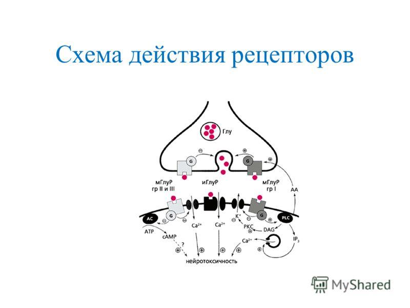 Схема действия рецепторов