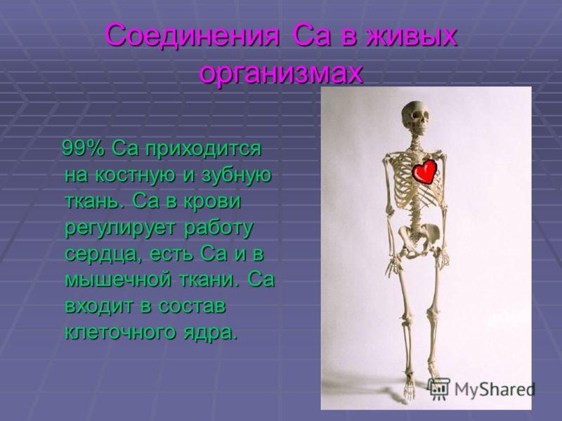 Соединения Са в живых организмах 99% Са приходится на костную и зубную ткань. Са в крови регулирует работу сердца, есть Са и в мышечной ткани. Са входит в состав клеточного ядра. 99% Са приходится на костную и зубную ткань. Са в крови регулирует рабо