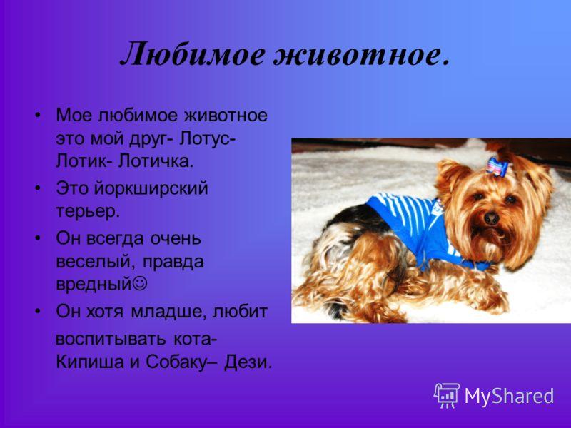 Любимое животное. Мое любимое животное это мой друг- Лотус- Лотик- Лотичка. Это йоркширский терьер. Он всегда очень веселый, правда вредный Он хотя младше, любит воспитывать кота- Кипиша и Собаку– Дези.