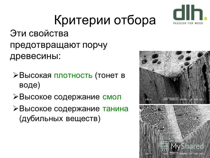 Критерии отбора Эти свойства предотвращают порчу древесины: Высокая плотность (тонет в воде) Высокое содержание смол Высокое содержание танина (дубильных веществ)