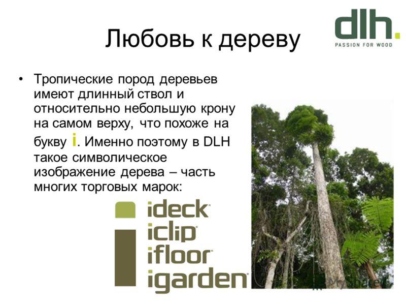 Любовь к дереву Тропические пород деревьев имеют длинный ствол и относительно небольшую крону на самом верху, что похоже на букву i. Именно поэтому в DLH такое символическое изображение дерева – часть многих торговых марок: