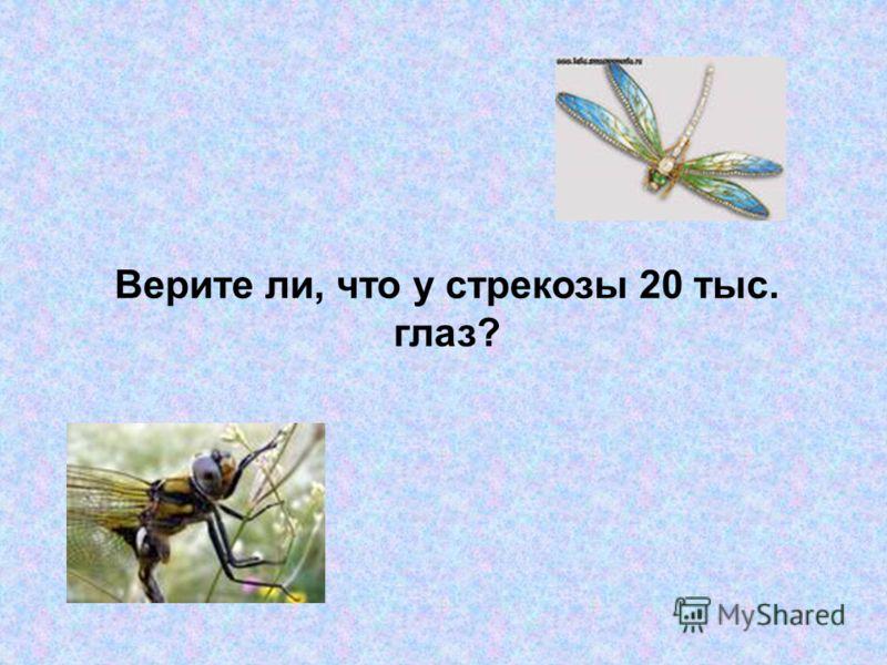 Верите ли, что у стрекозы 20 тыс. глаз?