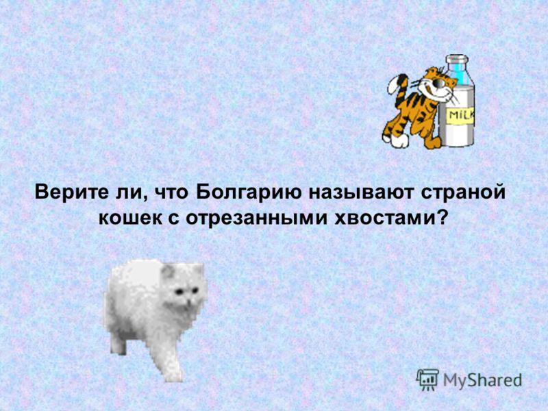 Верите ли, что Болгарию называют страной кошек с отрезанными хвостами?