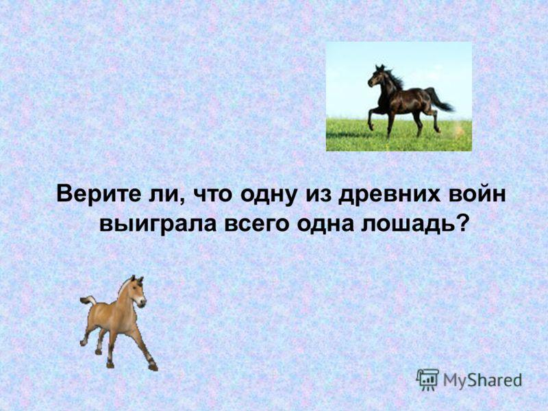Верите ли, что одну из древних войн выиграла всего одна лошадь?