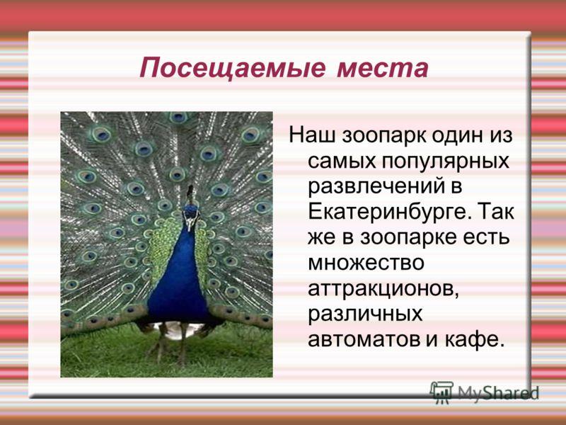 Посещаемые места Наш зоопарк один из самых популярных развлечений в Екатеринбурге. Так же в зоопарке есть множество аттракционов, различных автоматов и кафе.
