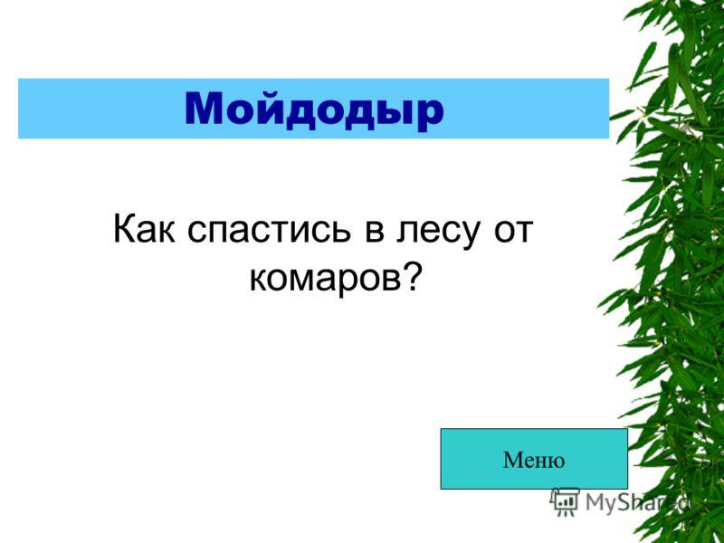Мойдодыр Как спастись в лесу от комаров? Меню