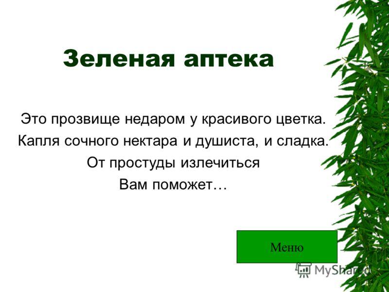 Зеленая аптека Это прозвище недаром у красивого цветка. Капля сочного нектара и душиста, и сладка. От простуды излечиться Вам поможет… Меню