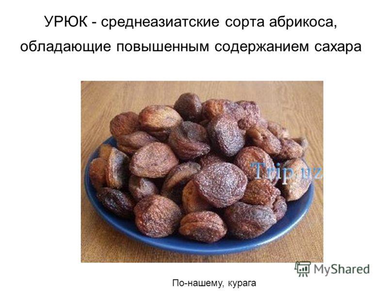 УРЮК - среднеазиатские сорта абрикоса, обладающие повышенным содержанием сахара По-нашему, курага