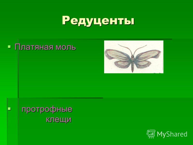 Редуценты Платяная моль Платяная моль протрофные клещи протрофные клещи