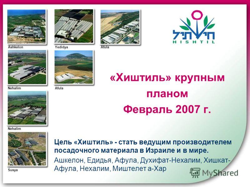 «Хиштиль» крупным планом Февраль 2007 г. Цель «Хиштиль» - стать ведущим производителем посадочного материала в Израиле и в мире. Ашкелон, Едидья, Афула, Духифат-Нехалим, Хишкат- Афула, Нехалим, Миштелет а-Хар Ashkelon Afula YedidyaAfula Nehalim Susya