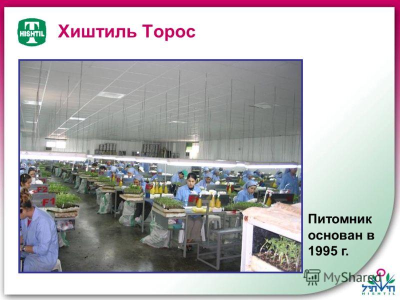 Хиштиль Торос Питомник основан в 1995 г.