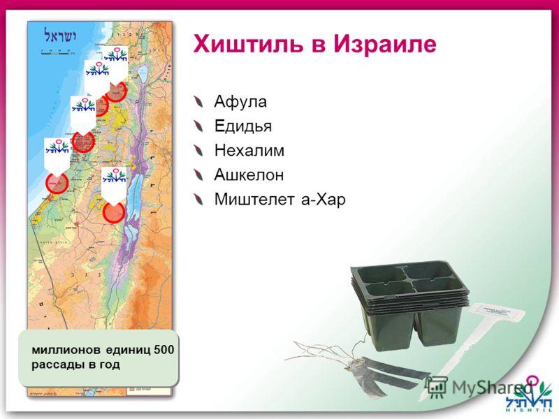 Хиштиль в Израиле Афула Едидья Нехалим Ашкелон Миштелет а-Хар 500 миллионов единиц рассады в год