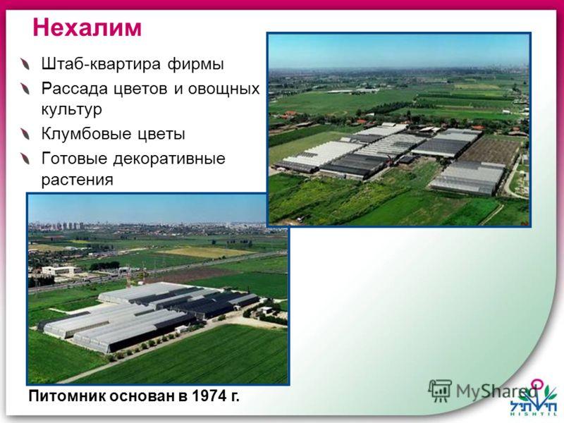 Штаб-квартира фирмы Рассада цветов и овощных культур Клумбовые цветы Готовые декоративные растения Нехалим Питомник основан в 1974 г.