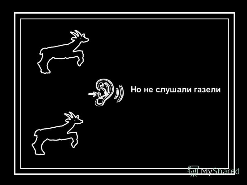 Но не слушали газели