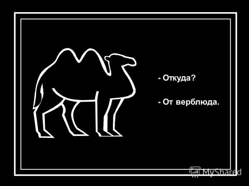 - Откуда? - От верблюда.