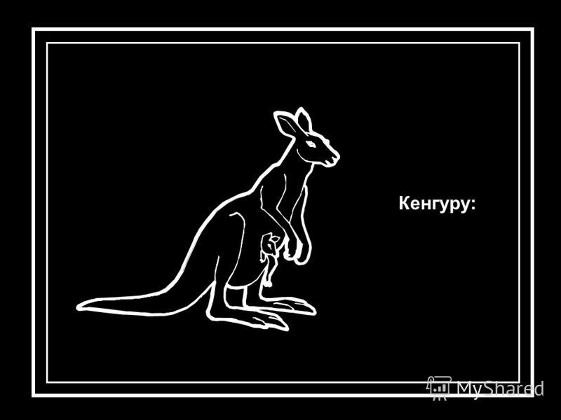 Кенгуру:
