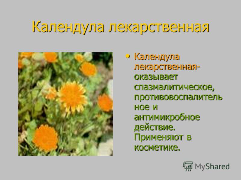 Календула лекарственная Календула лекарственная- оказывает спазмалитическое, противовоспалитель ное и антимикробное действие. Применяют в косметике. Календула лекарственная- оказывает спазмалитическое, противовоспалитель ное и антимикробное действие.