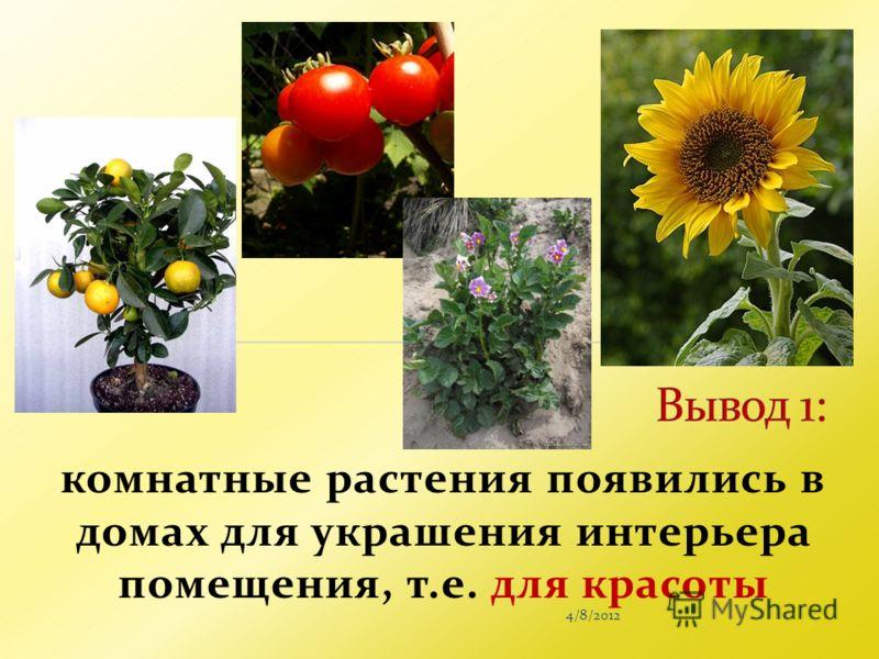 4/8/2012 комнатные растения появились в домах для украшения интерьера помещения, т.е. для красоты