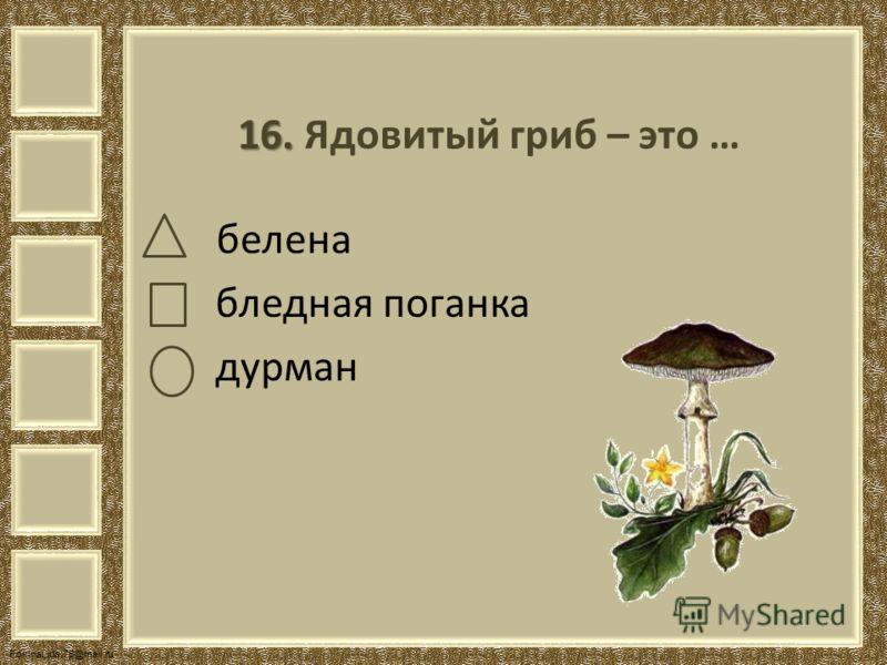 FokinaLida.75@mail.ru 16. 16. Ядовитый гриб – это … белена бледная поганка дурман