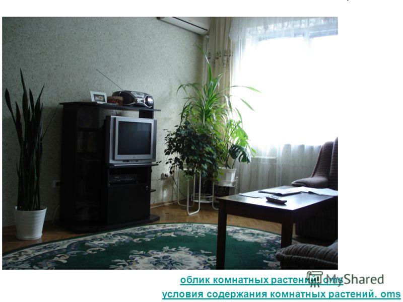 условия содержания комнатных растений. oms облик комнатных растений. oms