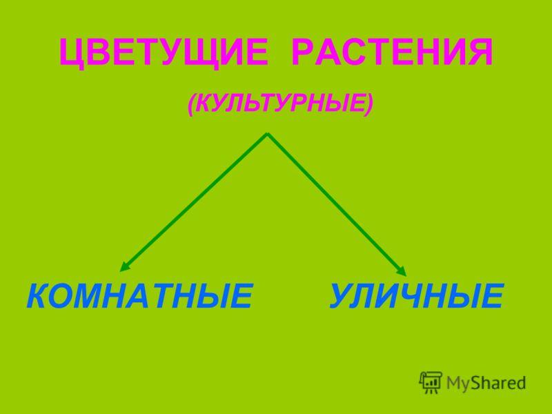 ЦВЕТУЩИЕ РАСТЕНИЯ КОМНАТНЫЕУЛИЧНЫЕ (КУЛЬТУРНЫЕ)
