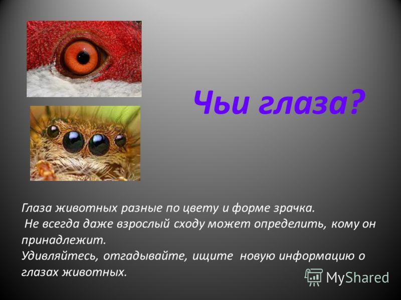 Чьи глаза? Глаза животных разные по цвету и форме зрачка. Не всегда даже взрослый сходу может определить, кому он принадлежит. Удивляйтесь, отгадывайте, ищите новую информацию о глазах животных.