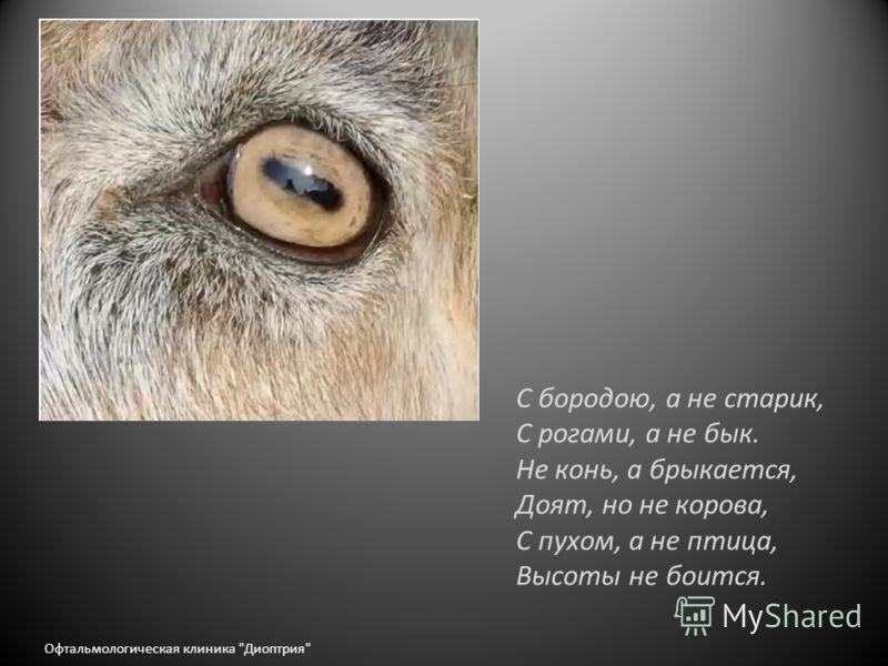 С бородою, а не старик, С рогами, а не бык. Не конь, а брыкается, Доят, но не корова, С пухом, а не птица, Высоты не боится. Офтальмологическая клиника Диоптрия
