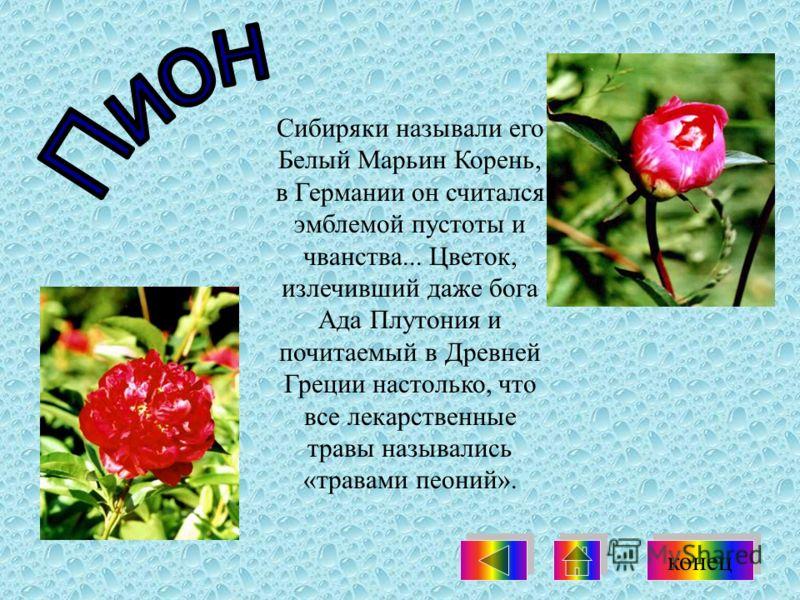 Сибиряки называли его Белый Марьин Корень, в Германии он считался эмблемой пустоты и чванства... Цветок, излечивший даже бога Ада Плутония и почитаемый в Древней Греции настолько, что все лекарственные травы назывались «травами пеоний». конец