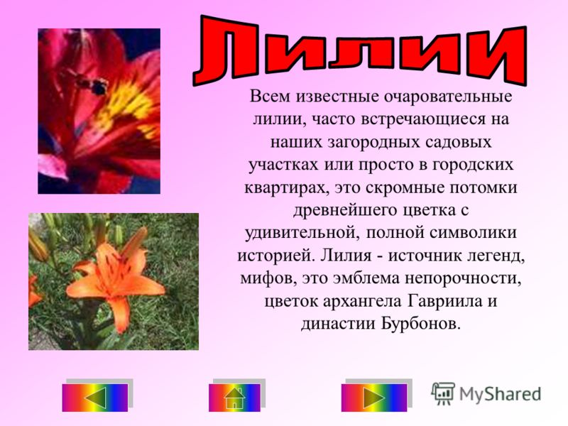 Всем известные очаровательные лилии, часто встречающиеся на наших загородных садовых участках или просто в городских квартирах, это скромные потомки древнейшего цветка с удивительной, полной символики историей. Лилия - источник легенд, мифов, это эмб