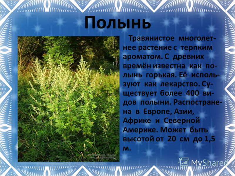 Полынь Травянистое многолет- нее растение с терпким ароматом. С древних времён известна как по- лынь горькая. Её исполь- зуют как лекарство. Су- ществует более 400 ви- дов полыни. Распостране- на в Европе, Азии, Африке и Северной Америке. Может быть