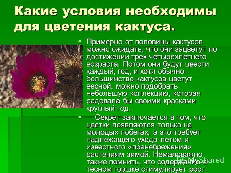 Какие условия необходимы для цветения кактуса. Примерно от половины кактусов можно ожидать, что они зацветут по достижении трех-четырехлетнего возраста. Потом они будут цвести каждый, год, и хотя обычно большинство кактусов цветут весной, можно подоб